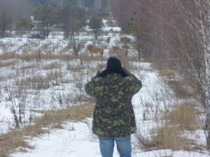 Спостереження за конями