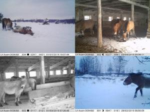 Примеры фотографий, присланных фотоловушками