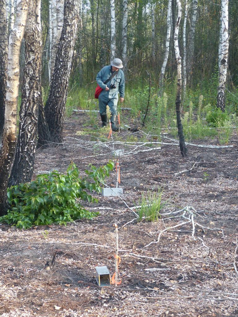 Перевірка пасток-живоловок на дослідній ділянці/Check of live traps at the research site