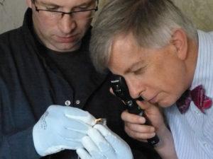 Осмотр исследуемых животных опытным офтальмологом
