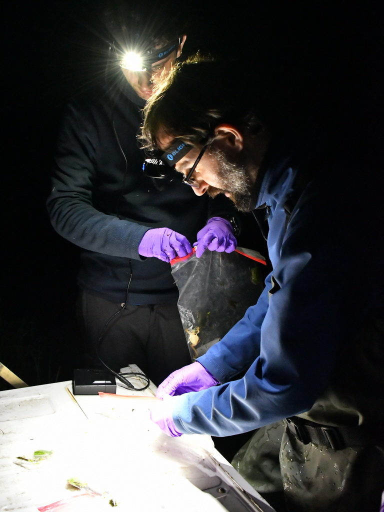 Исследователи во время ночных отловов квакш