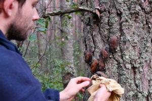 Відпускання досліджених кажанів/Release of the investigated bats