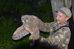 Eagle owl (Bubo bubo) in the hands of the researcher Sergei Gashchak
