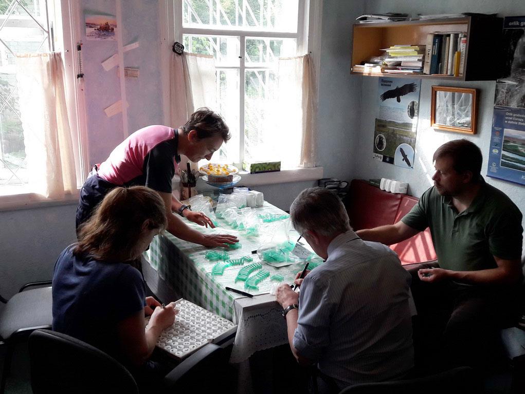 Підготовка пробірок до роботи/Preparation of test tubes for work